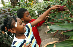 Two children discover leafy palm's at the Lincoln Park Conservatory.